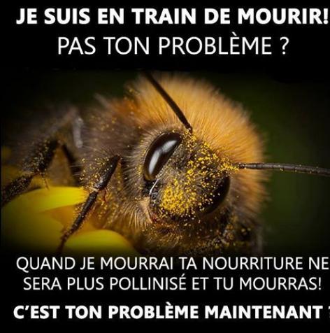 Protégeons nos insectes pollinisateurs