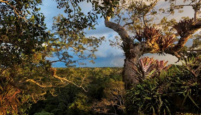 La forêt amazonienne en danger!