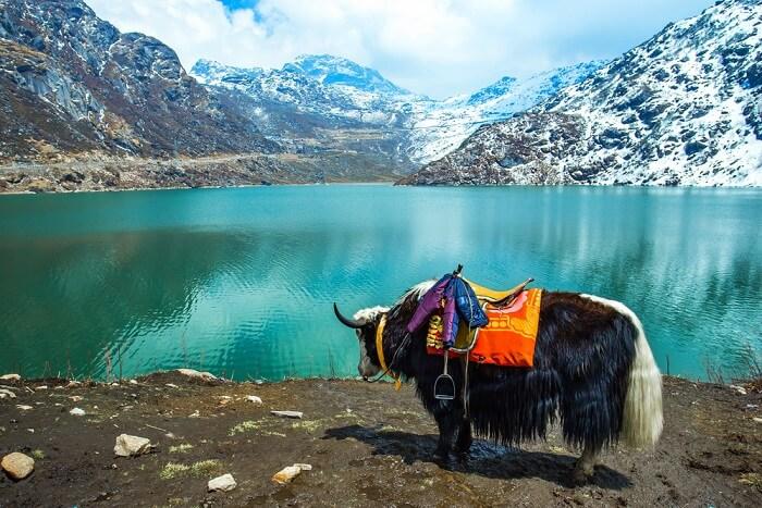 """Le """"Sikkim"""" déclaré Pays 100 % Bio"""