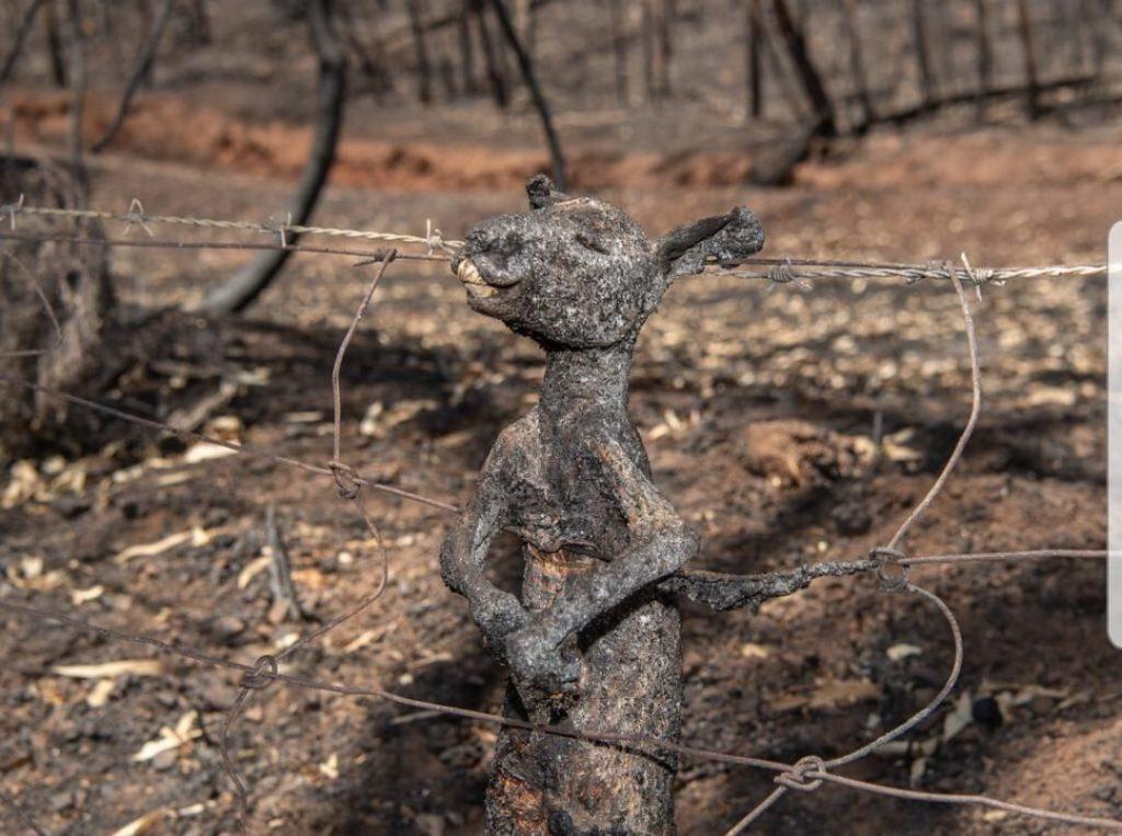 désastre_australien