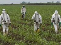 Explosion des ventes de pesticides et glyphosates
